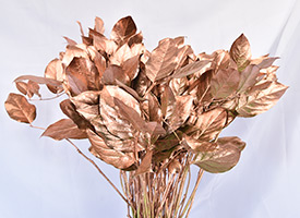 Copper Penny Salal with Shimmer