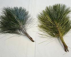 Gilded & Frosted Long Needle Pine